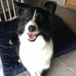 Lotto, tortured in China but now safe in the care of Somerset & Dorset Animal Rescue